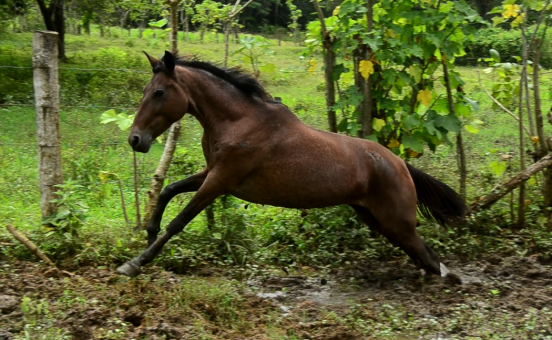 Horseback Riding Manuel Antonio - The Riding Adventure