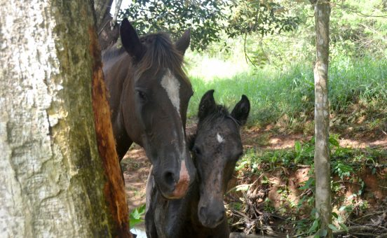 Horseback Riding Manuel Antonio - the riding adventure