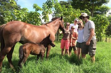 The Riding Adventure Costa Rica Horseback
