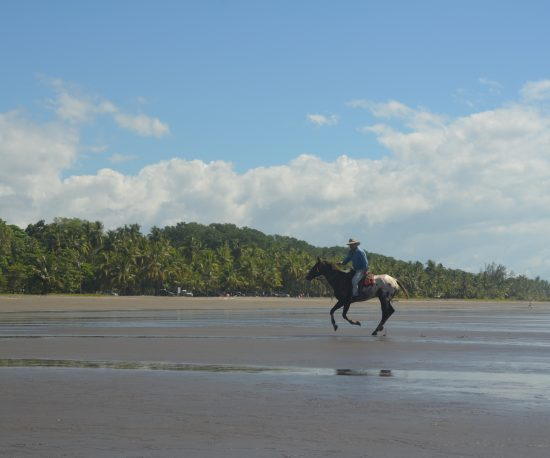 The Riding Adventure - Costa Rica Horseback Riding 4