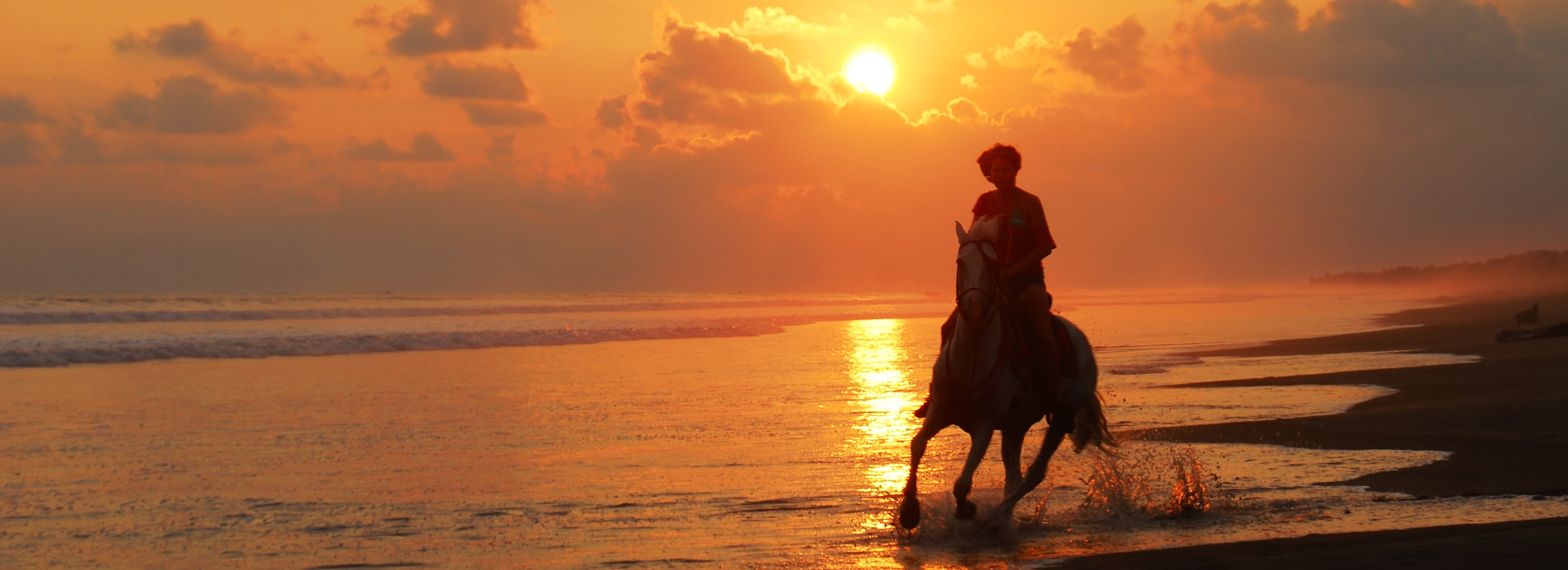 beach horseback riding - the riding adventure